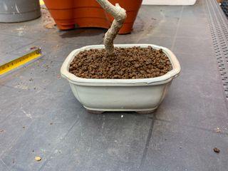 Maceta bonsai