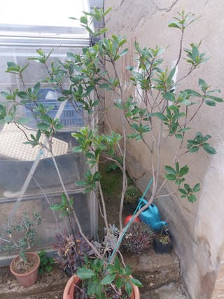 madroño kiwi Nispero pistacho