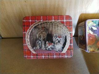 lata caja antigua con dibujo d perros