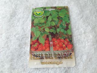 Semillas para fresa