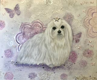 Cuadro de perro Bichon Maltés