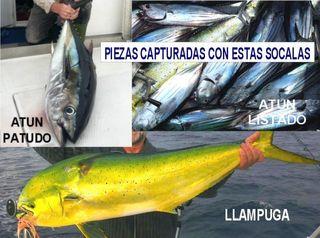 Señuelo curricán bonito atún muestra