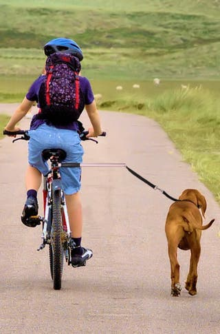 Soporte para paseo perro en bicicleta