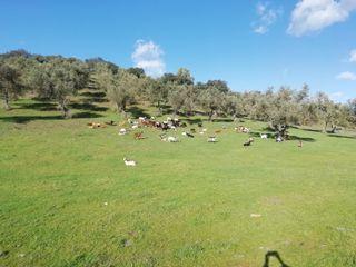 Finca rústica en la sierra de Huelva