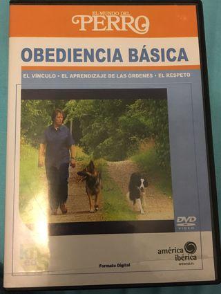 Dvd obediencia básica para perros