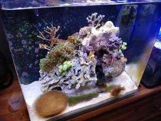 KIT Nano acuario OCEAN FREE