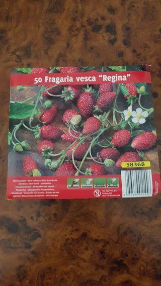 semilla de fresa