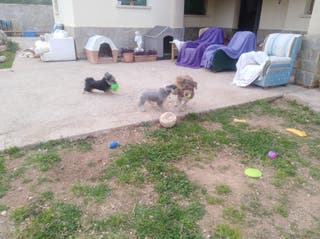 canguro de perros