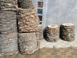 Troncos de palmera