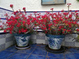 flores y macetero