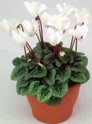 Planta de flor
