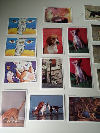 Cromos perros y gatos