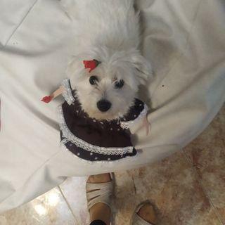 traje de flamenca para mascotas