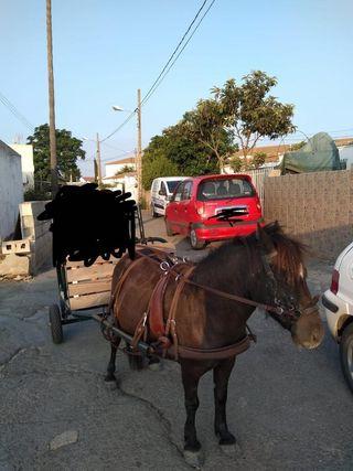 pony y charret