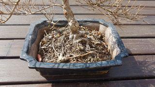 Maceteros de bonsáis
