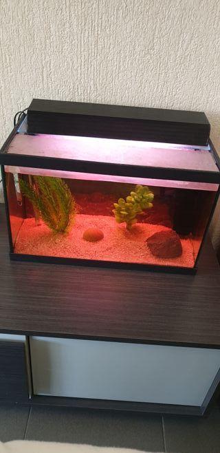 Pecera/acuario 50 litros