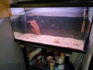 acuario con muchos accesorios
