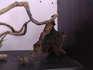 troncos acuario