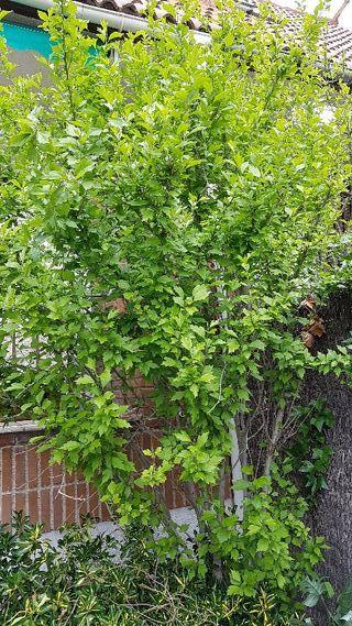 Vendo precioso árbol plantado en tierra