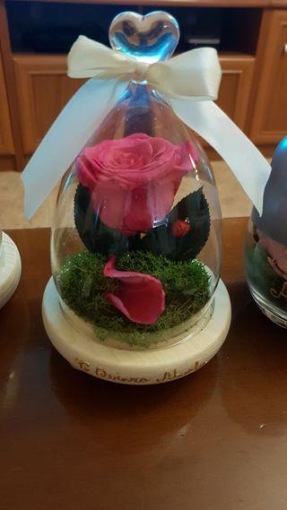 Rosa natural preservada