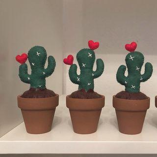 Cuqui Cactus