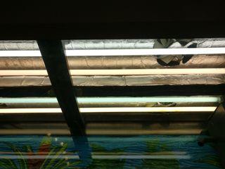 Acuario juwel río 240 con mueble