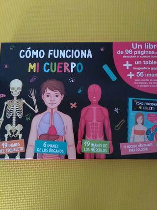 Huesos, músculos y órganos. Niños