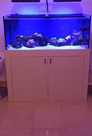 Acuario marino de 300 litros