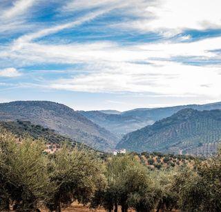 Vendo finca de olivos