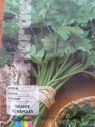 Semilla Perejil Gigante de Nápoles