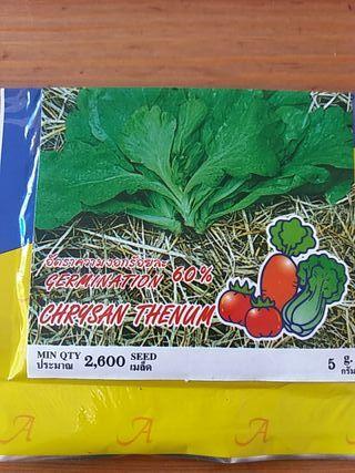 Semilla Crisantemo Tailandia
