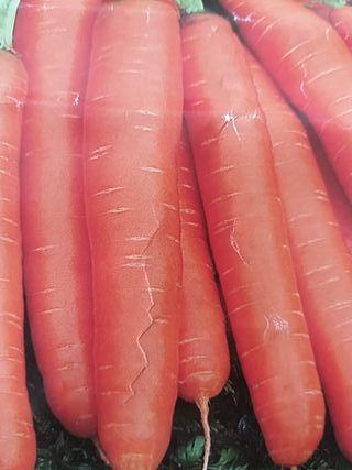 Semilla Zanahoria