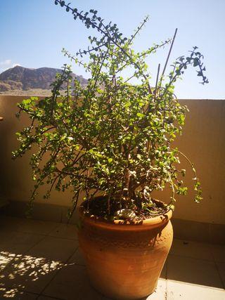 Planta decorativa con macetero de barro