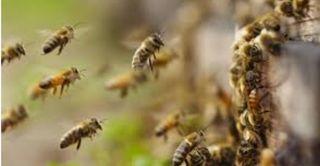 Se retiran enjambres y material apicola Apicultor