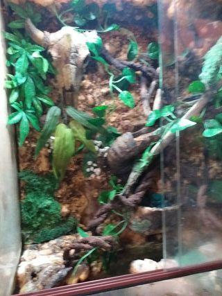 terrario reptiles o anfibios