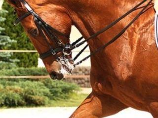 Profesor equitación