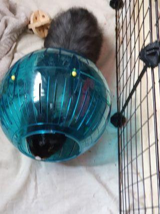 bola para animales
