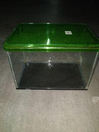 pecera pequeña acuario