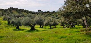 URGE - Venta finca olivar ecológico - 5 Ha -