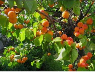 se necesita gente para la recogida de fruta