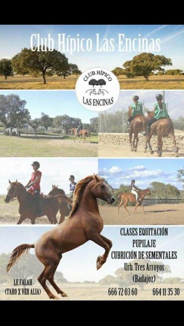 Clases de equitación: club hípico las encinas