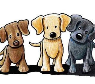 Cuidadora/paseador de Perros