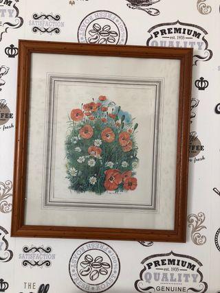 Vendo grabados de flores
