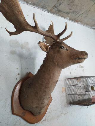decoración ciervo