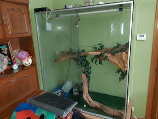 terrario vitrina cristal