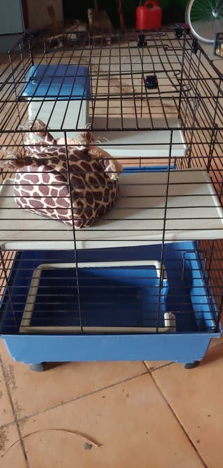 jaula grande PRs conejo hurón