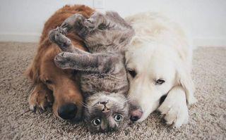 Cuidador de Mascota