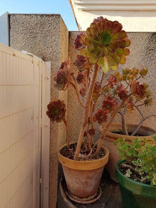 plantas y macetas de barro