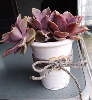 maceta cerámica con cactus