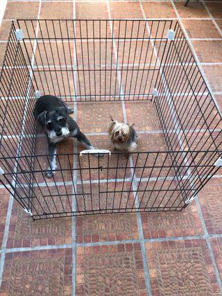 Cercado para perros